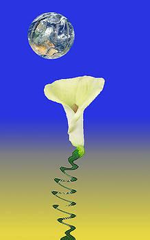 Sun Flower by Bruce Iorio