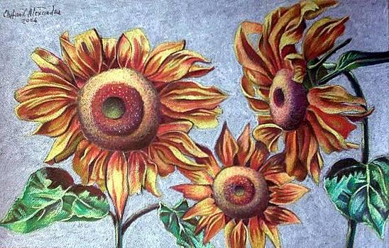 Sun Flower by Chifan Catalin  Alexandru