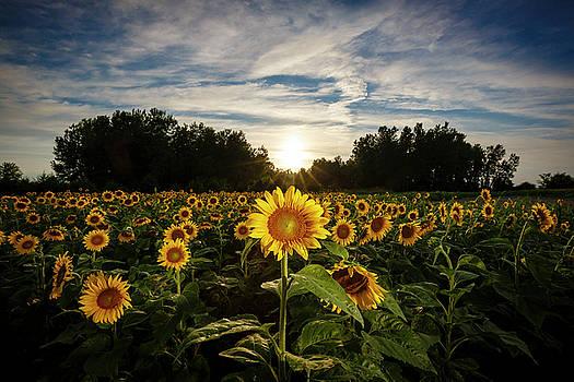 Sun Flower by Notley Hawkins