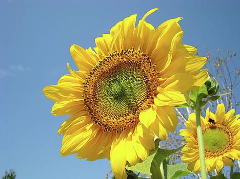 Baslee Troutman - Sun Flowers Garden art prints Baslee Troutman