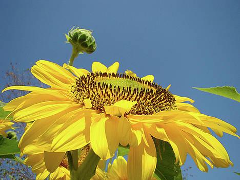 Baslee Troutman - Sun Flowers Summer Sunny Day 8 Blue Skies Giclee Art Prints Baslee Troutman