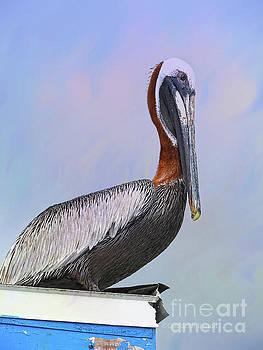 Sun Glow Pelican by Deborah Benoit