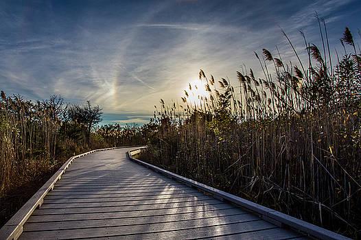 Sun Halo by Roderick Breem