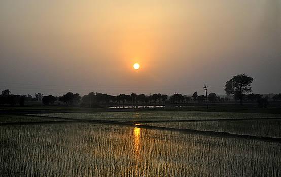 Bliss Of Art - Sun in the fields