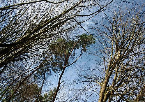 Sun Kissed Branches by Jaeda DeWalt