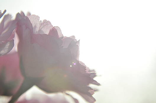 Sun kissed by Emilia Brasier