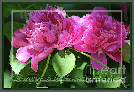 Sandra Huston - Sun Kissed Peonies for Mom