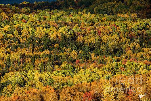 Sun Lighting Up Fall Trees by Alana Ranney