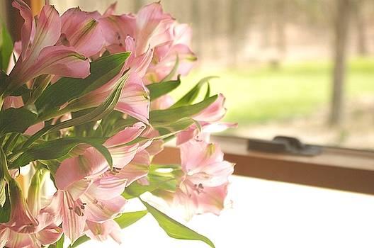 Sun lit Lilies by Stephanie Calhoun