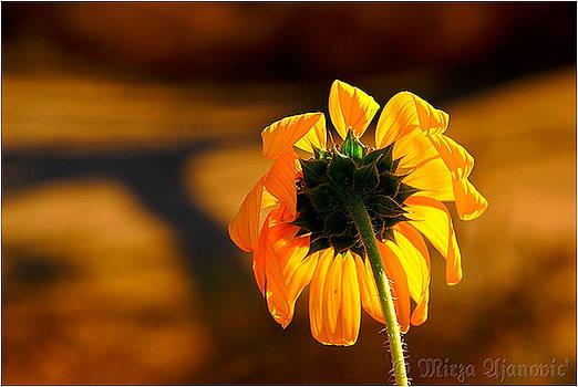 Sun by Mirza Ajanovic