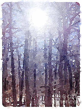 Sun on Cold Trees by Janet Dodrill