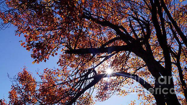 Sun Peaking Threw by Debra Crank