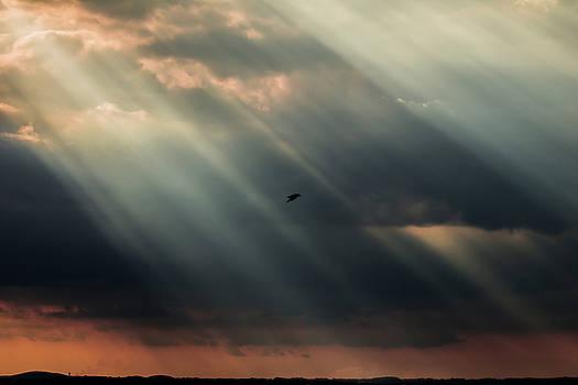 Sun rays and bird by Massimo Discepoli