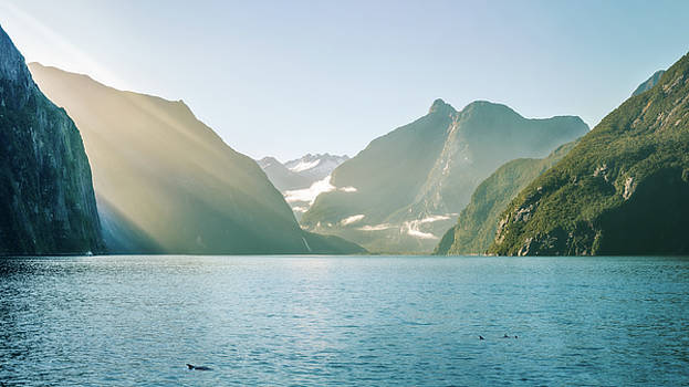Sun rays and dolphins on a foggy morning at Milford Sound by Daniela Constantinescu