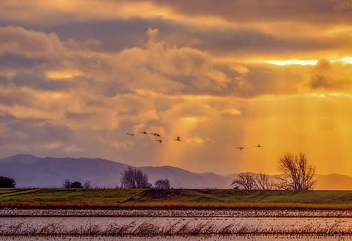 Sun Rays and Sandhill Cranes by Marc Crumpler