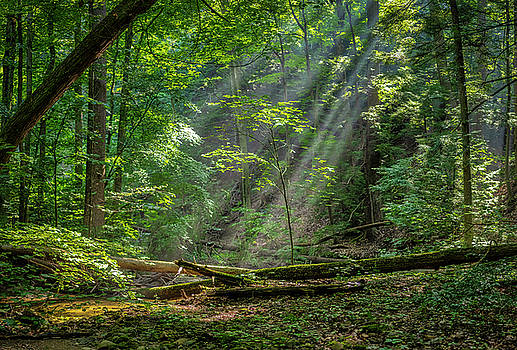 Sun Rays in the Forest by Adam Kilbourne