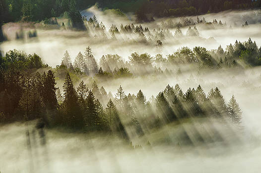 Sun Rays Over Foggy Oregon Forest by David Gn