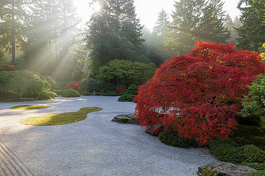 Sun Rays over Japanese Flat Sand Garden in Autumn by David Gn
