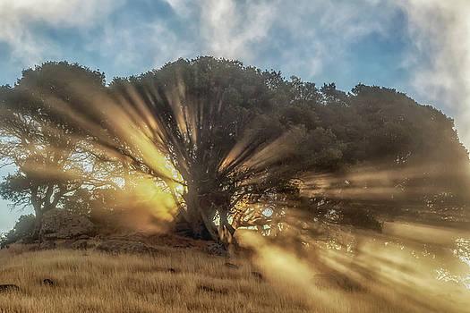 Marc Crumpler - Sun Rays Through Fog at Sunrise