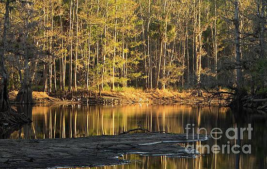 Sun Rising at Fisheating Creek by Matt Tilghman