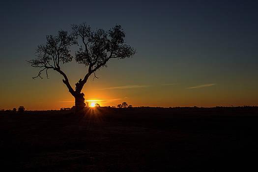 Sun Rising by Tammy Chesney