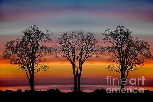 Sun Salutation by Andrea Kollo