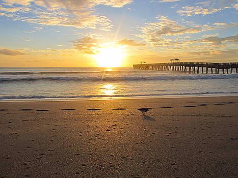 Sun, Sea, and The Sandpiper by Zachary Baty