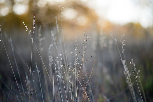 Sun sets over tall grass by Sharon Wunder