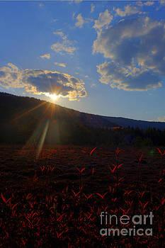 Dan Friend - Sun setting at Cranberry Glades