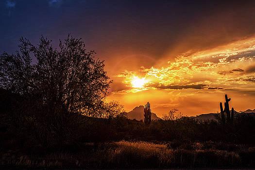 Sun Setting on the Sonoran  by Saija Lehtonen