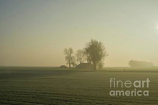 Patricia Hofmeester - Sun shining on an early foggy morning