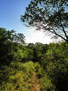 Sun shining over a hiking path in the Atlantic Forest by Helissa Grundemann