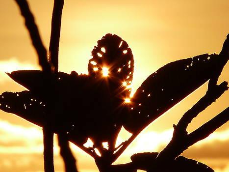 Sun Shining Through A Leaf by Jonny Jelinek