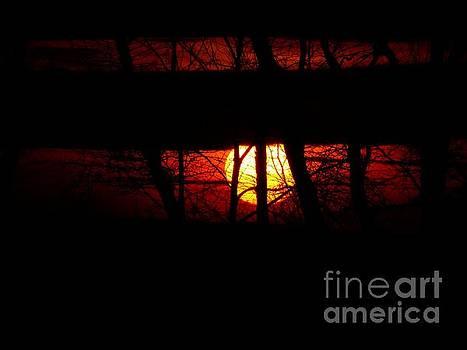 Sun Tree by Donald C Morgan