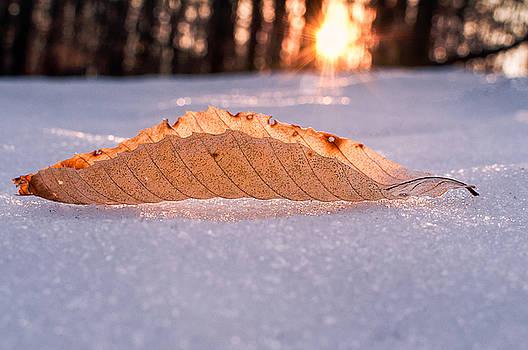 Sunbathing by Craig Szymanski