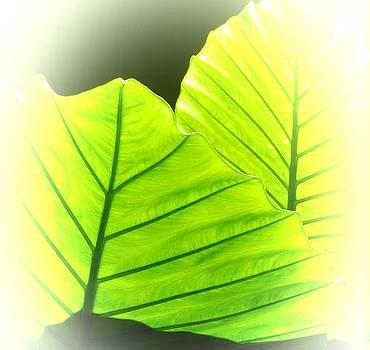 Sunbathing Leaves by Bobbie Barth