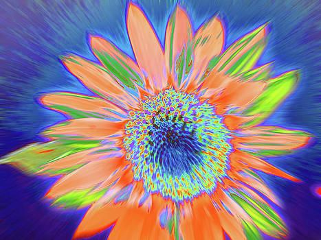 Sunbeamer by Cris Fulton