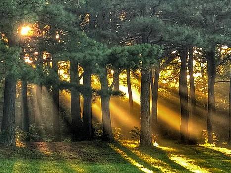 Sunbeams II by Sumoflam Photography