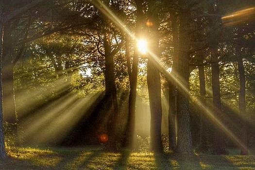 Sunbeams III by Sumoflam Photography