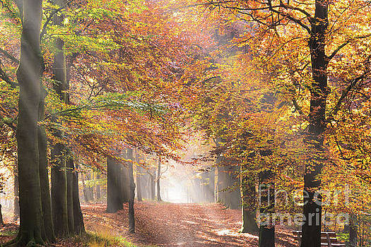 Sunbeams in a forest in autumn by IPics Photography