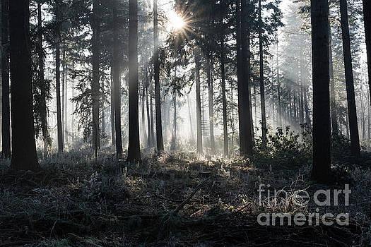 Compuinfoto - sunbeams in winter landscape