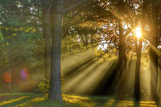 Sunbeams IV by Sumoflam Photography