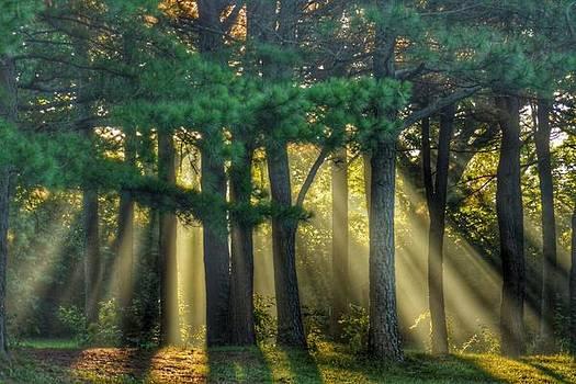 Sunbeams VI by Sumoflam Photography