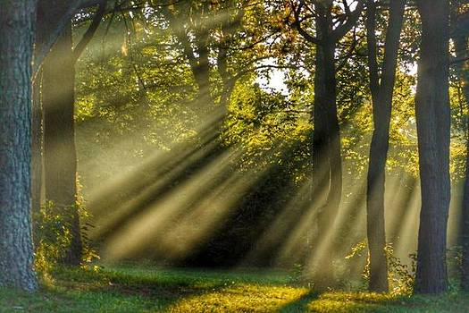 Sunbeams VII by Sumoflam Photography
