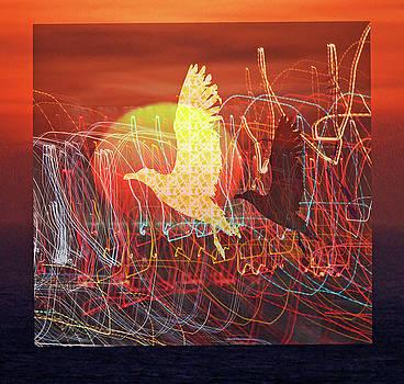 Rochelle Berman - sunbird