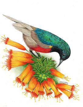 Sunbird by Sharon Blanchard