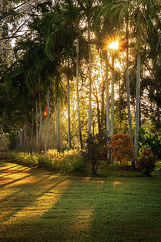 Sunburst at Litchfield National Park by Daniela Constantinescu