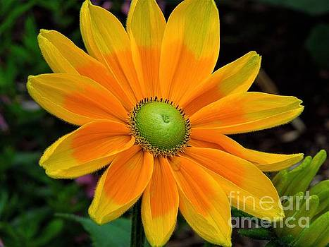 Sunburst by Chad and Stacey Hall