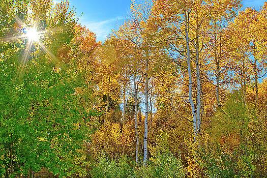 Sunburst in Aspen by Forrest Ray