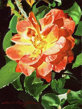 Sunburst Rose by David Lloyd Glover